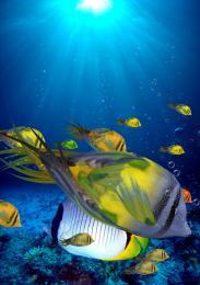 feathersfish