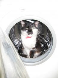 Thewashingmachineforcats