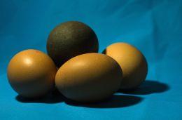 ...plus one dinasaur egg