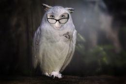 Owly me