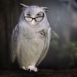Owlyme