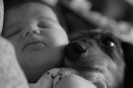 BabyampPuppyinBalance