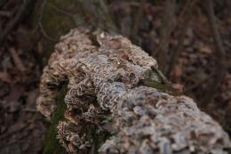 FungiProblem