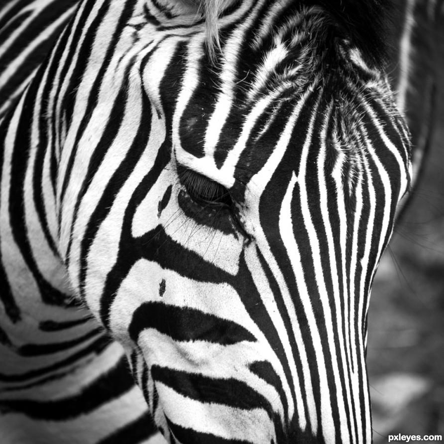 Botswana - Zebra