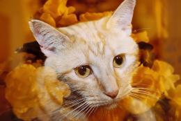 My Kitty Sidney