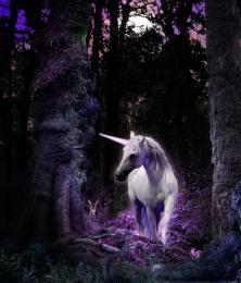 Unicorn Picture