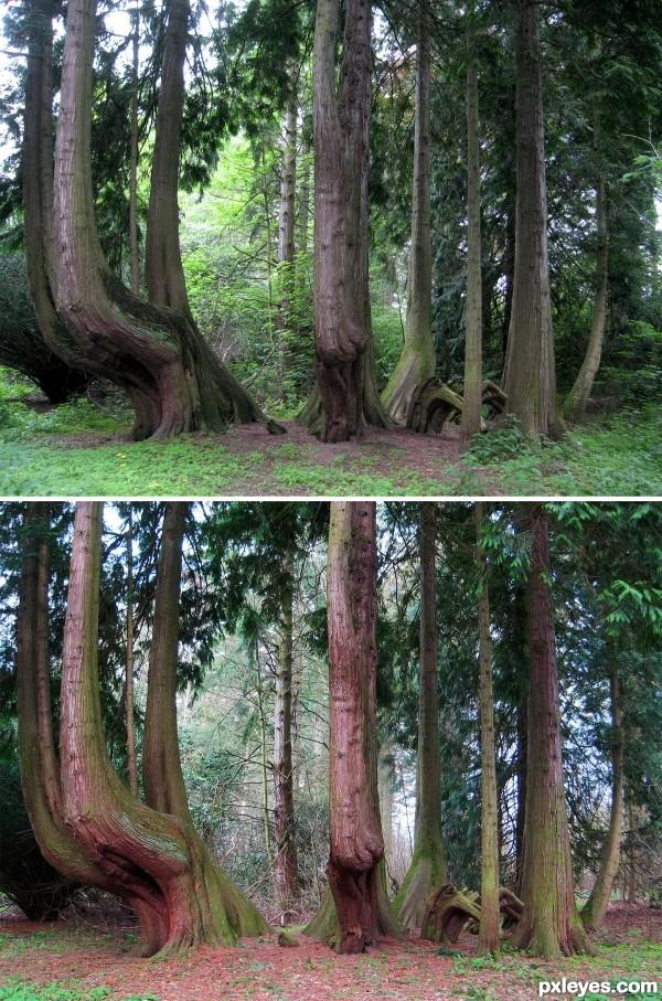 Tree Grouping