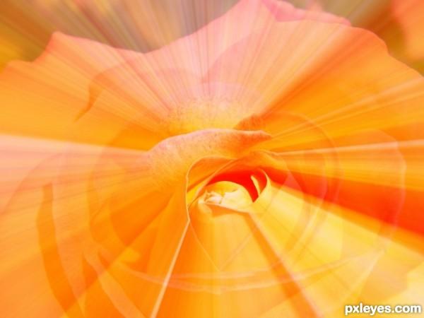 The Shining Rose