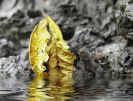 Yelow leaf