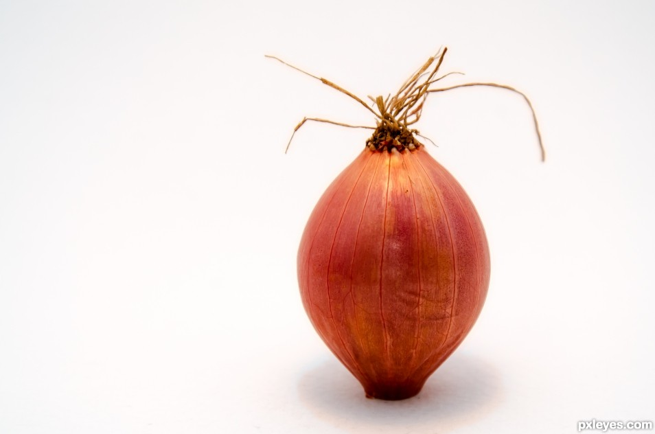 The Onion. The always present vegetable.