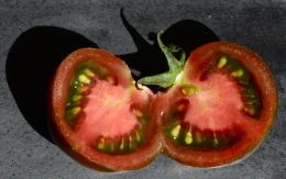 perfect ripeness
