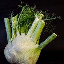 Thefennel