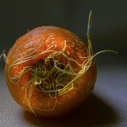 CarrotTop