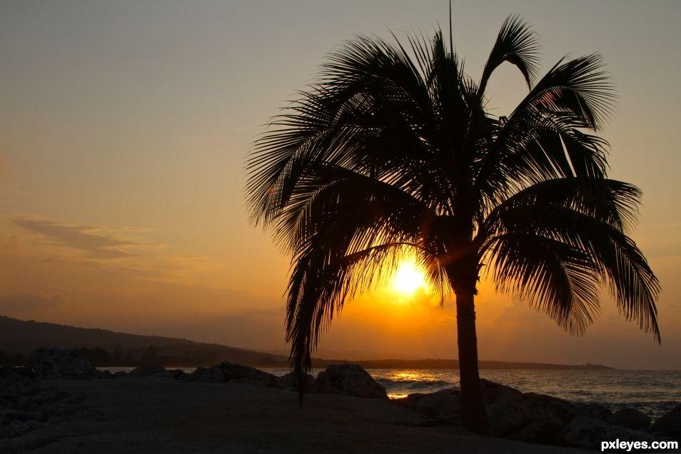Jamaican Palm