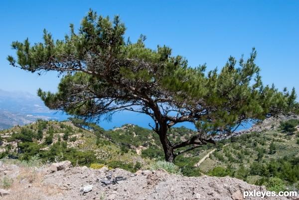 High level pine