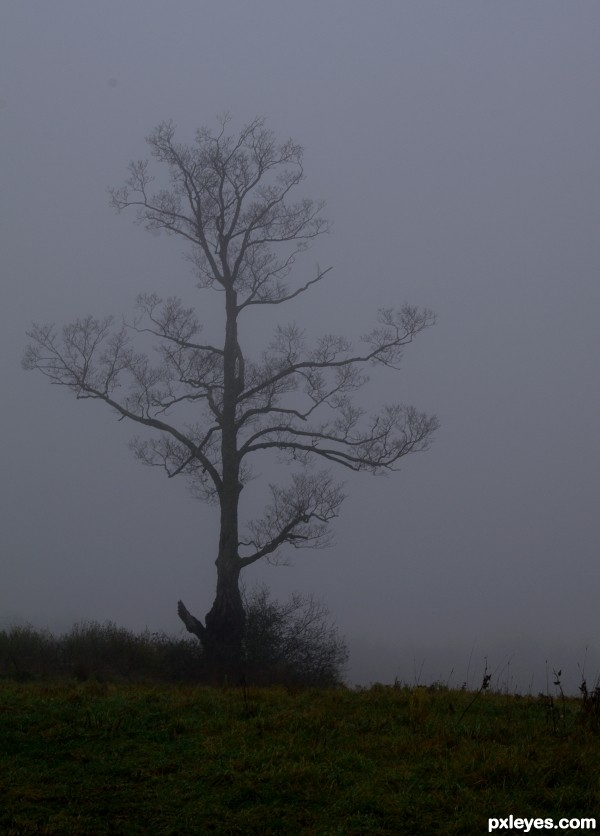 Sentinal in the Fog