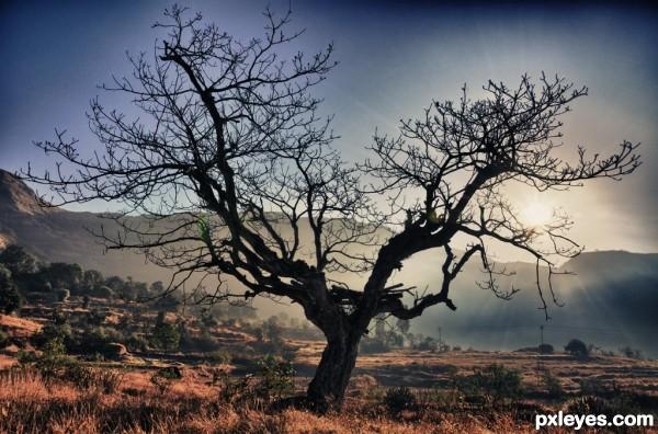 Tree with Drama