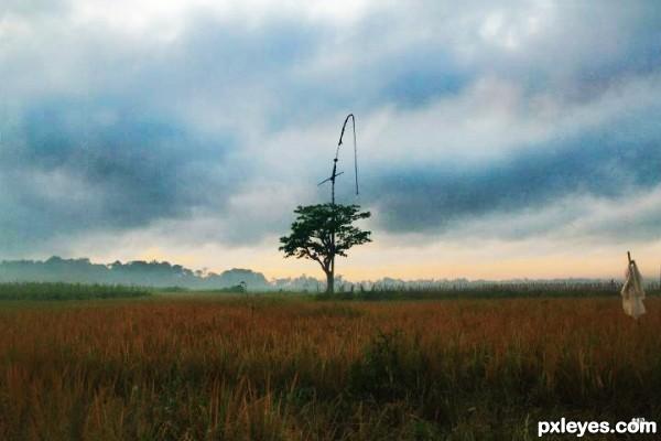 Windmill Tree