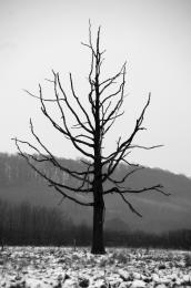 OneDeadTree