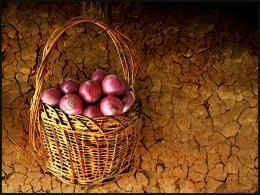 onionbasket