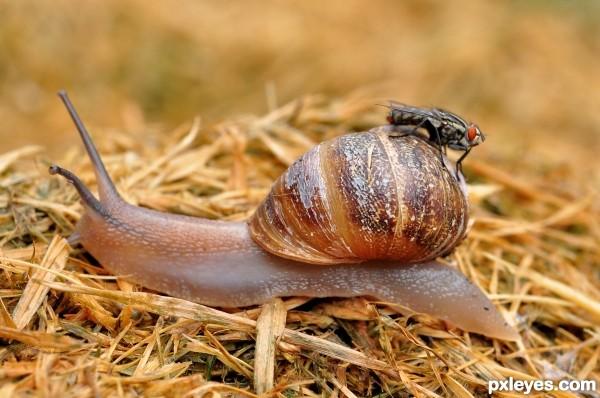 Slow n Fast