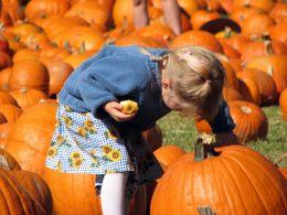 Entry number 106780 Pumpkin Girl