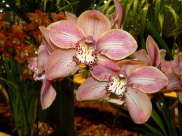 orchidsinpalepink