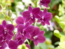 violetbeauty