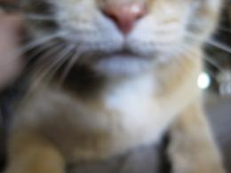 Hazy Cat Picture