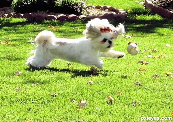 The Joy of Sissy Dog!
