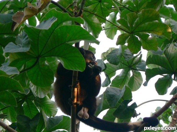 bad monkey angle