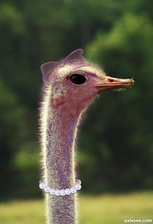 Mrs Ostrich