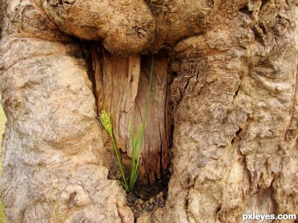 Grass on Tree-Bark