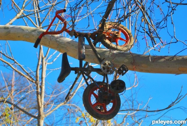 Up a Tree with a Pedal