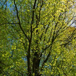 Treesofgreen