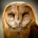 owl face photoshop contest