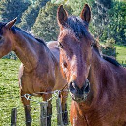 twohorses