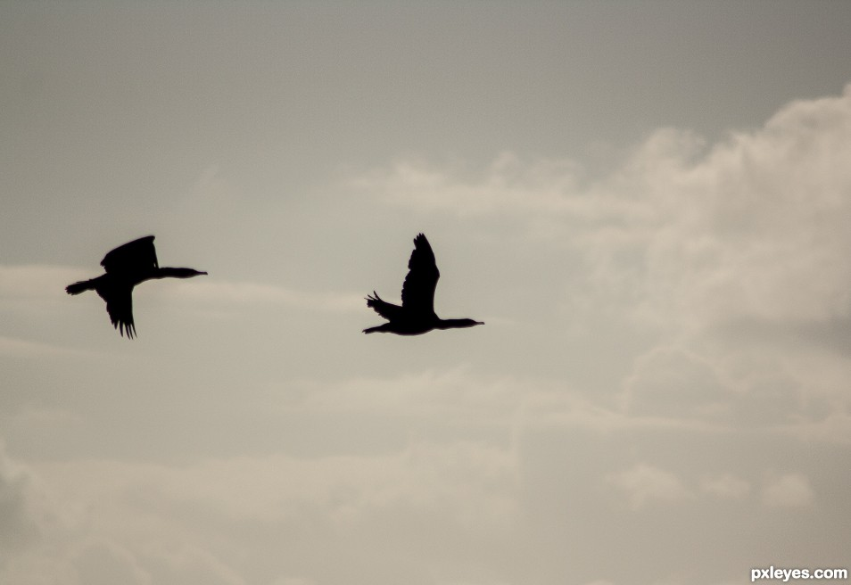 Flight northward