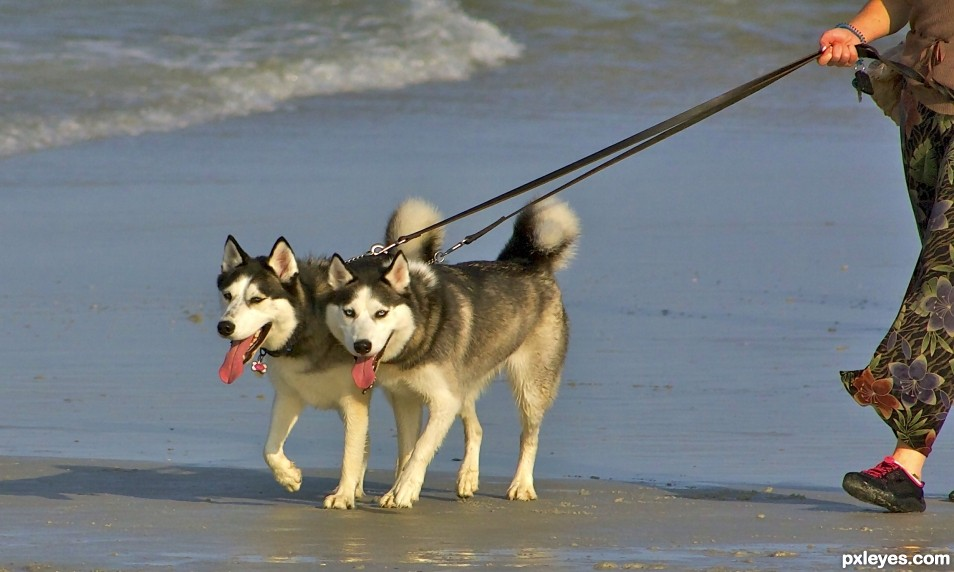 These dogs need to be cool