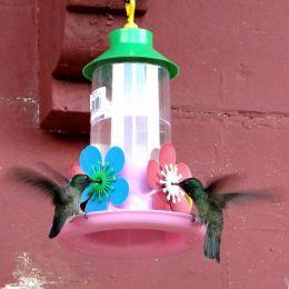 Hummingbirdsvisitation