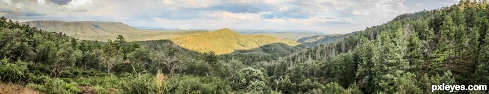 Pine Pano