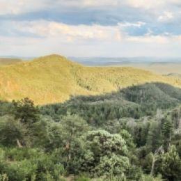 PinePano