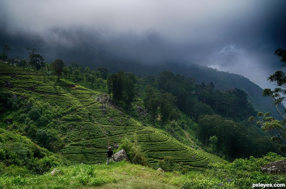 Liptons Tea Gardens , Sri Lanka
