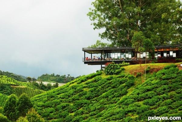 cafe at tea hill