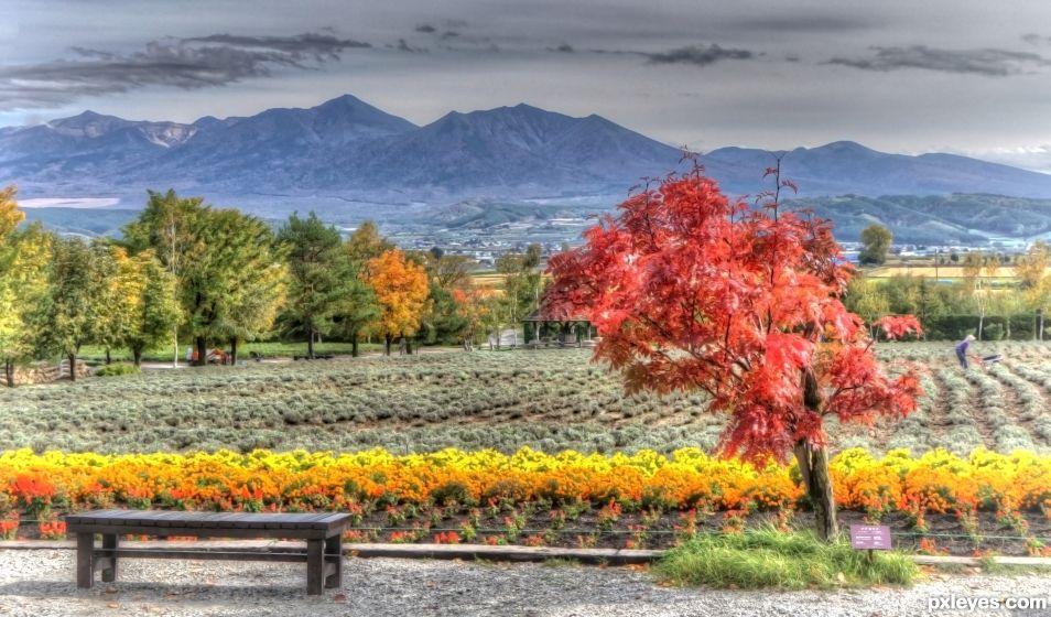 Furano National Park