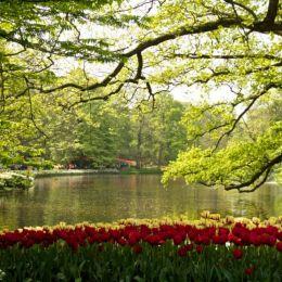 Park Picture