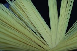 SpaghettiPlant