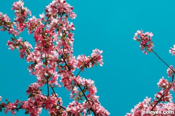 Spring come back