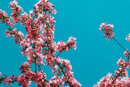 Springcomeback