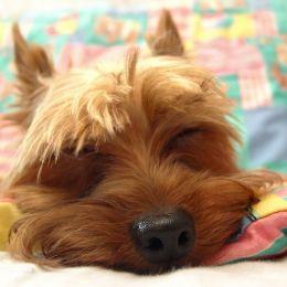 Almostasleep